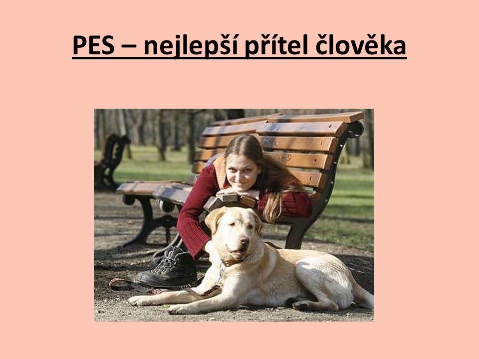 PES – nejlepší přítel člověka