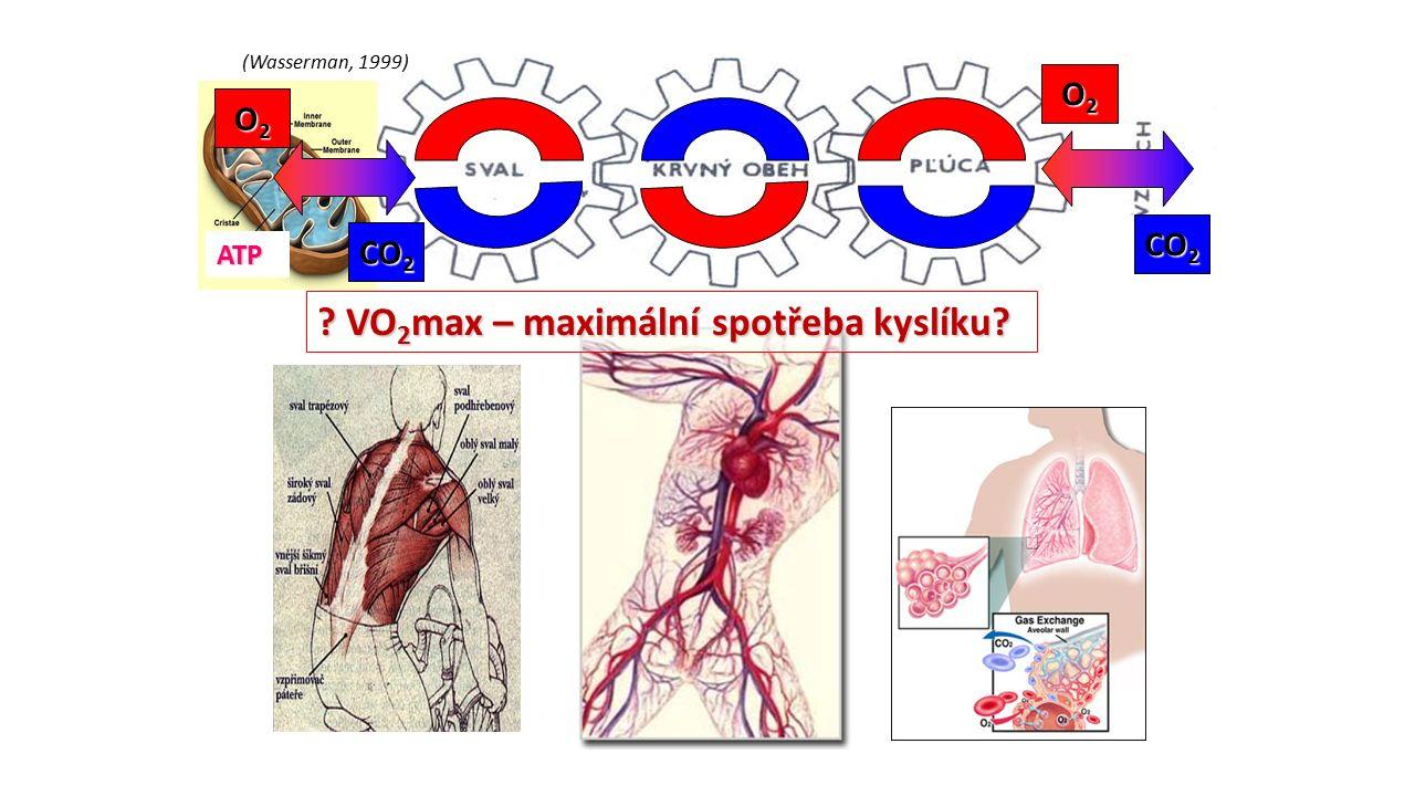 (Wasserman, 1999) ATP O2O2O2O2 O2O2O2O2 CO 2 ? VO 2 max – maximální spotřeba kyslíku?