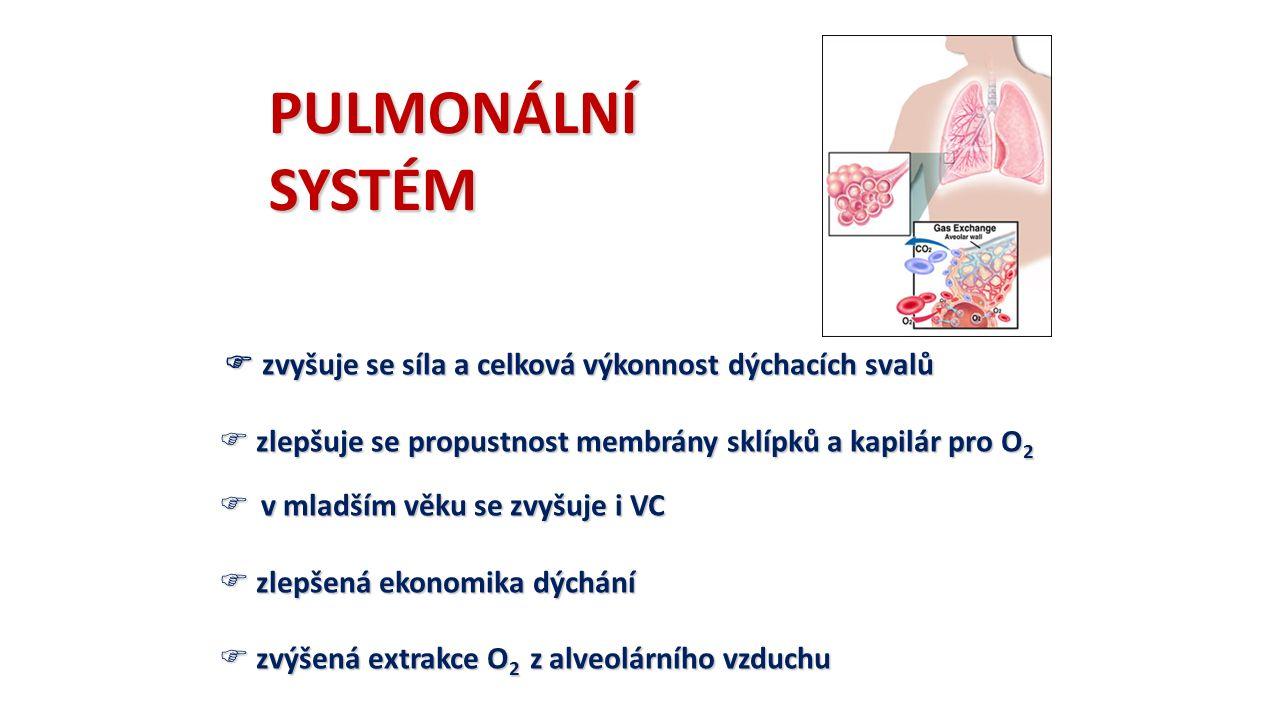 PULMONÁLNÍSYSTÉM  zvyšuje se síla a celková výkonnost dýchacích svalů  zlepšuje se propustnost membrány sklípků a kapilár pro O 2  v mladším věku se zvyšuje i VC  zlepšená ekonomika dýchání  zvýšená extrakce O 2 z alveolárního vzduchu
