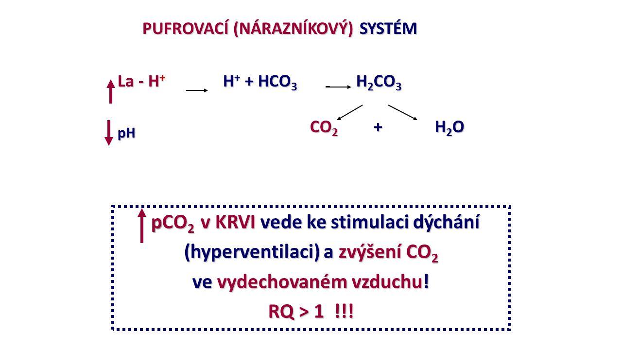 PUFROVACÍ (NÁRAZNÍKOVÝ) SYSTÉM PUFROVACÍ (NÁRAZNÍKOVÝ) SYSTÉM La - H + H + + HCO 3 H 2 CO 3 pH CO 2 + H 2 O pCO 2 v KRVI vede ke stimulaci dýchání (hyperventilaci) a zvýšení CO 2 ve vydechovaném vzduchu.