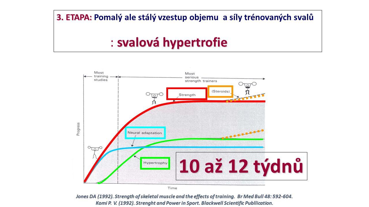 3. ETAPA: 3. ETAPA: Pomalý ale stálý vzestup objemu a síly trénovaných svalů svalová hypertrofie : svalová hypertrofie 10 až 12 týdnů Jones DA (1992).