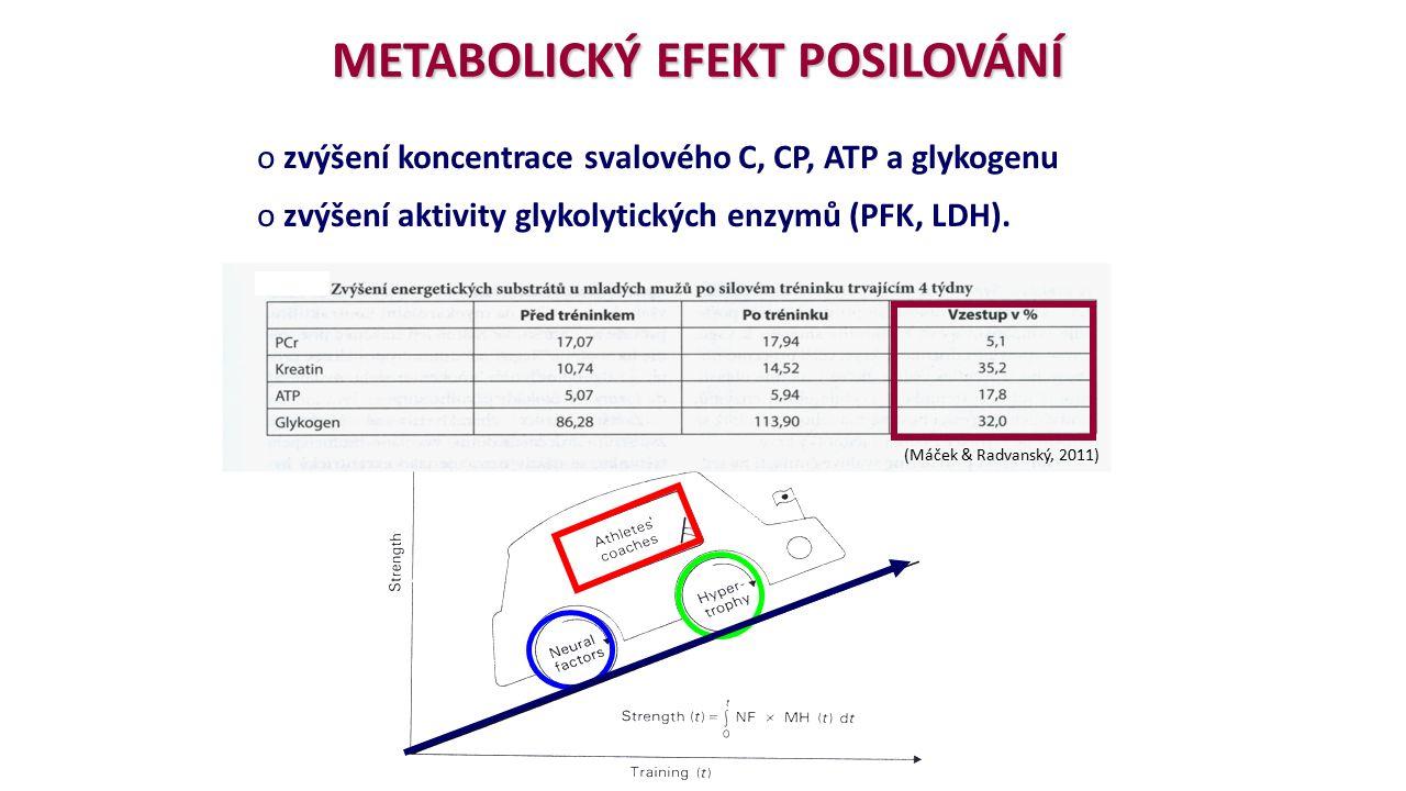 o zvýšení koncentrace svalového C, CP, ATP a glykogenu o zvýšení aktivity glykolytických enzymů (PFK, LDH).