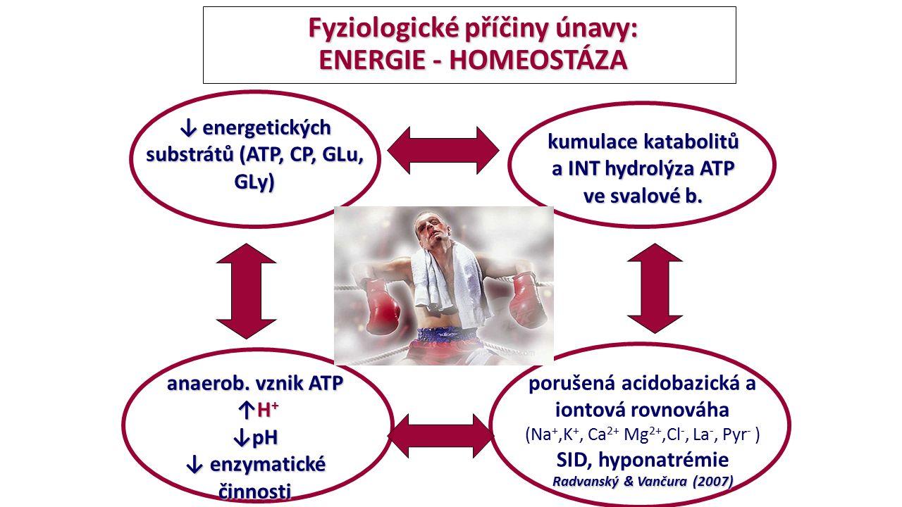 Fyziologické příčiny únavy: ENERGIE - HOMEOSTÁZA Fyziologické příčiny únavy: ENERGIE - HOMEOSTÁZA anaerob. vznik ATP ↑H + ↑H + ↓pH ↓ enzymatické činno