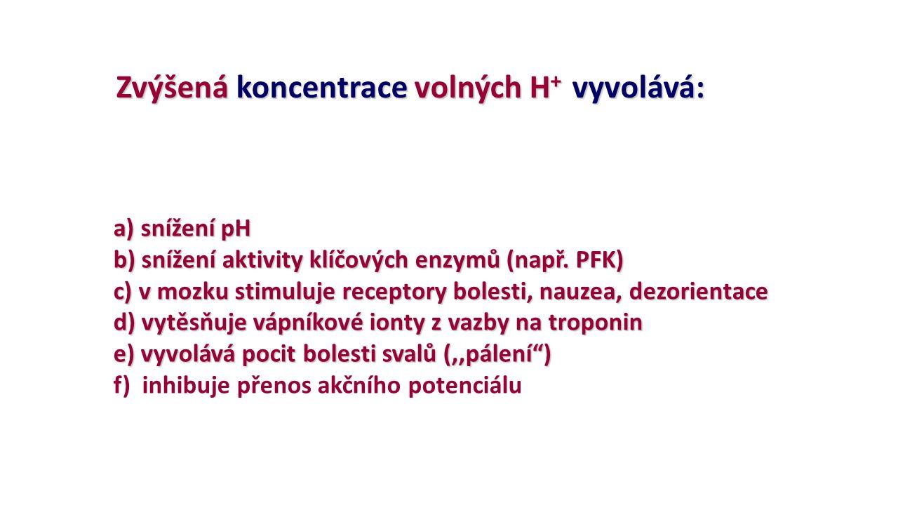 Zvýšená koncentrace volných H + vyvolává: Zvýšená koncentrace volných H + vyvolává: a) snížení pH b) snížení aktivity klíčových enzymů (např. PFK) c)