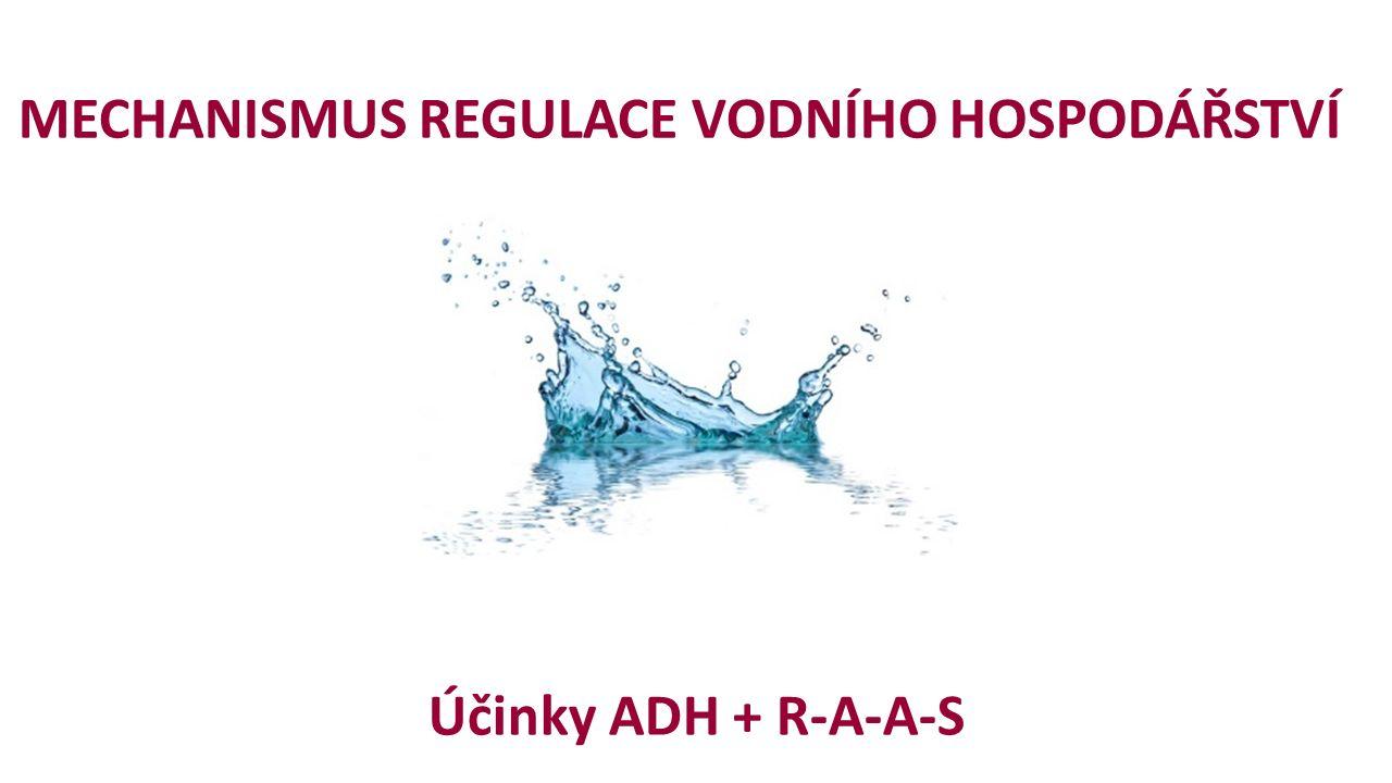 MECHANISMUS REGULACE VODNÍHO HOSPODÁŘSTVÍ Účinky ADH + R-A-A-S