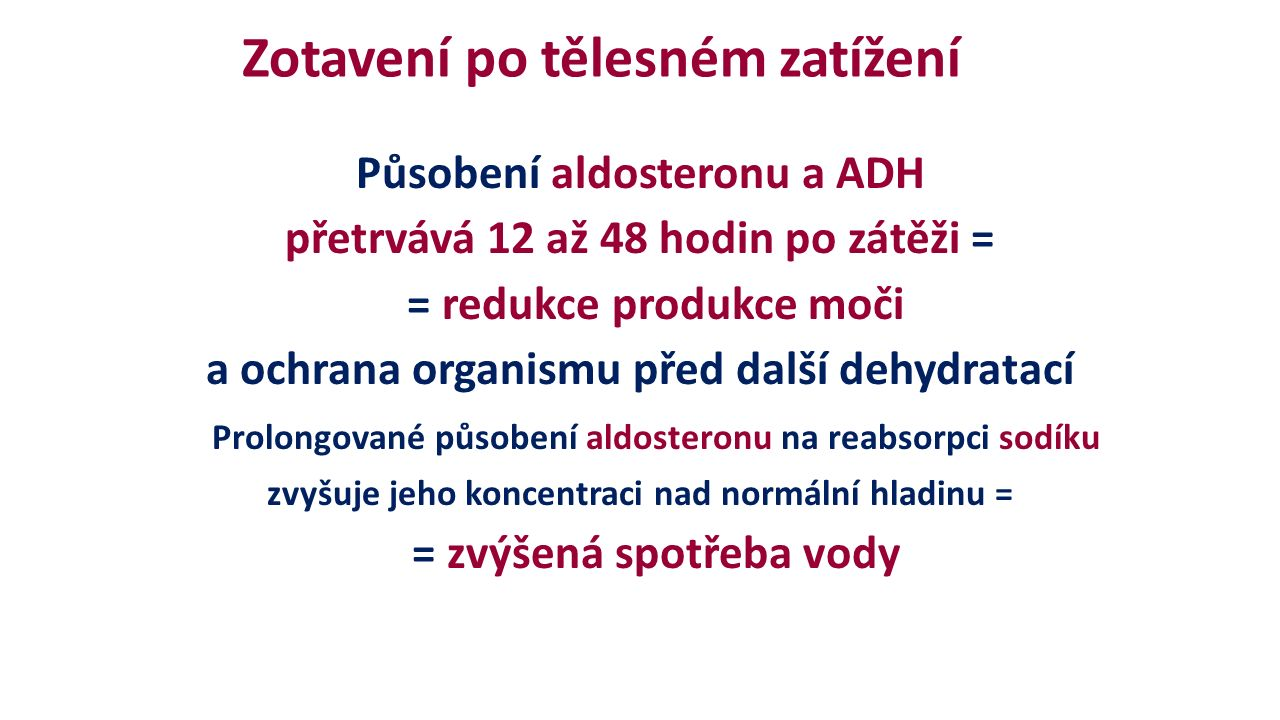 Zotavení po tělesném zatížení Působení aldosteronu a ADH přetrvává 12 až 48 hodin po zátěži = = redukce produkce moči a ochrana organismu před další dehydratací Prolongované působení aldosteronu na reabsorpci sodíku zvyšuje jeho koncentraci nad normální hladinu = = zvýšená spotřeba vody