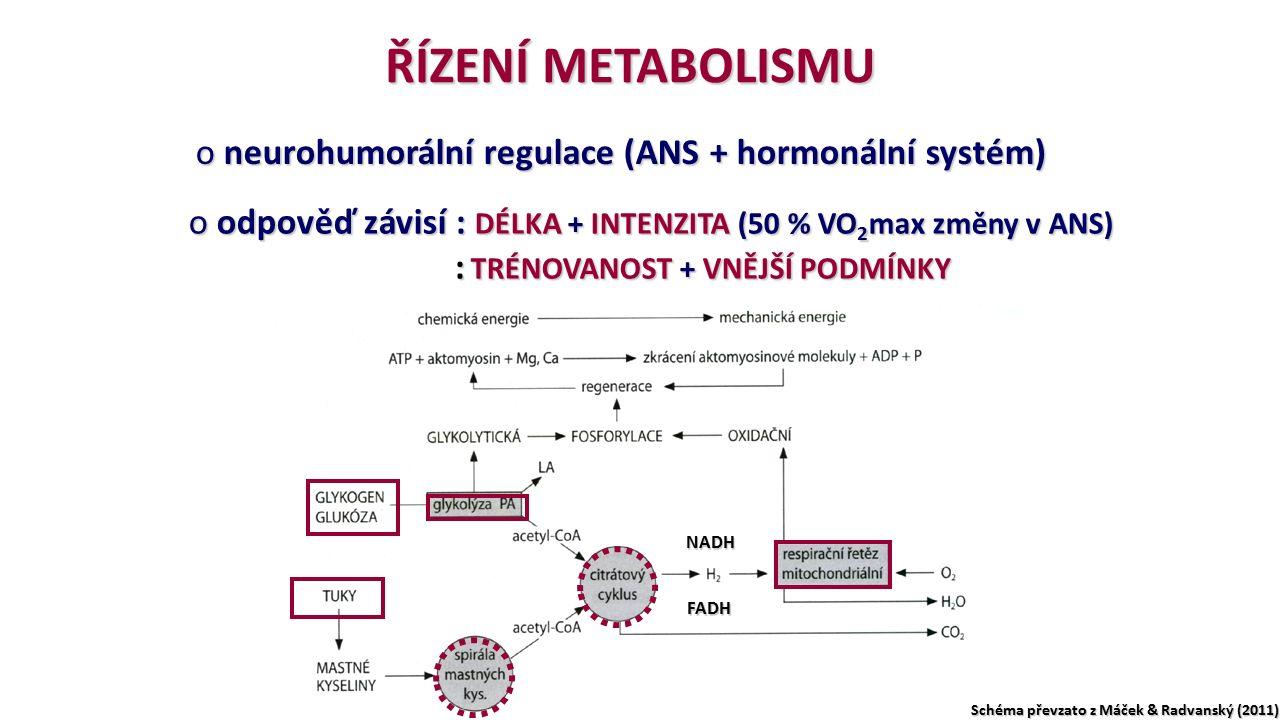 ŘÍZENÍ METABOLISMU o neurohumorální regulace (ANS + hormonální systém) o odpověď závisí : DÉLKA + INTENZITA (50 % VO 2 max změny v ANS) : TRÉNOVANOST + VNĚJŠÍ PODMÍNKY NADH FADH Schéma převzato z Máček & Radvanský (2011)