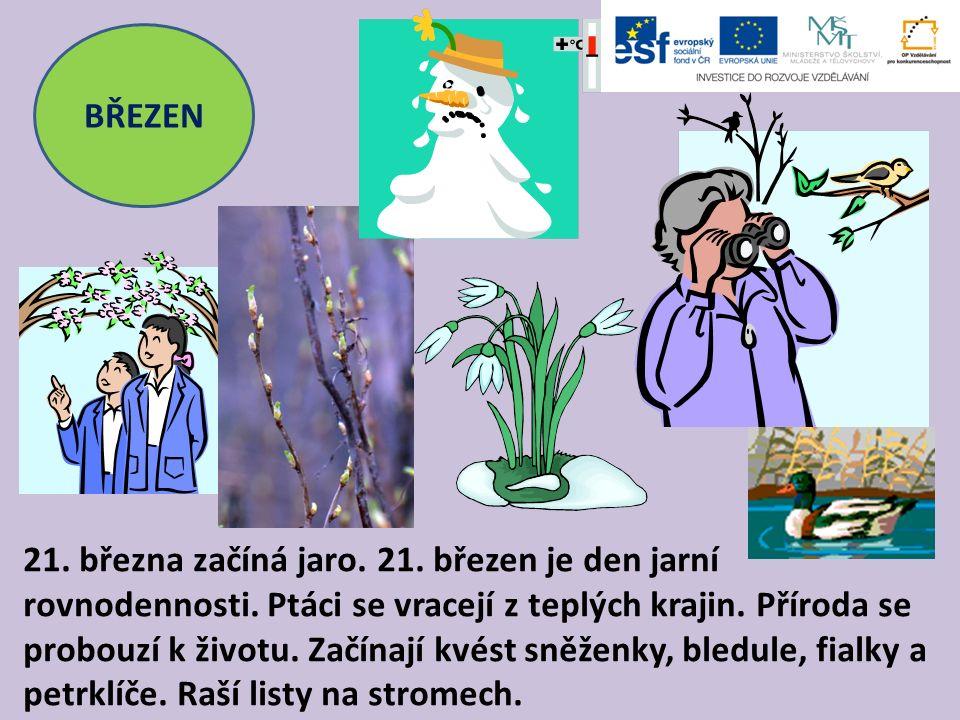 BŘEZEN 21. března začíná jaro. 21. březen je den jarní rovnodennosti. Ptáci se vracejí z teplých krajin. Příroda se probouzí k životu. Začínají kvést
