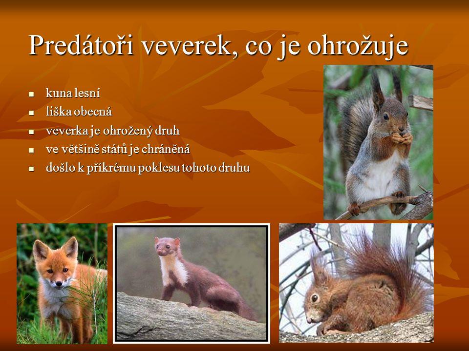 Predátoři veverek, co je ohrožuje kuna lesní kuna lesní liška obecná liška obecná veverka je ohrožený druh veverka je ohrožený druh ve většině států je chráněná ve většině států je chráněná došlo k příkrému poklesu tohoto druhu došlo k příkrému poklesu tohoto druhu