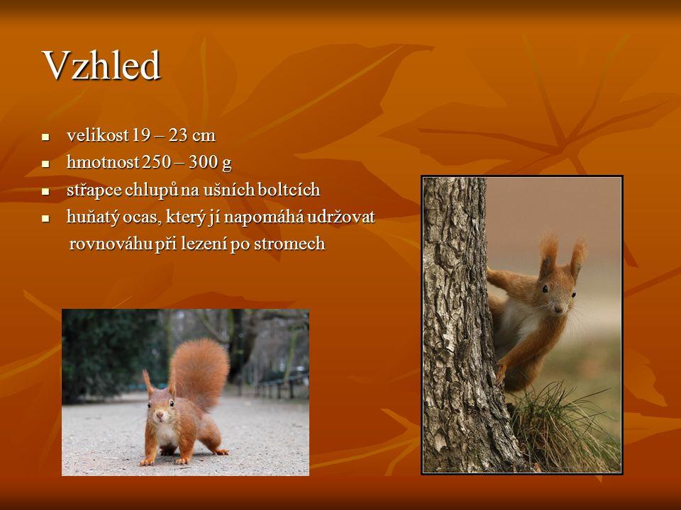 Vzhled velikost 19 – 23 cm velikost 19 – 23 cm hmotnost 250 – 300 g hmotnost 250 – 300 g střapce chlupů na ušních boltcích střapce chlupů na ušních boltcích huňatý ocas, který jí napomáhá udržovat huňatý ocas, který jí napomáhá udržovat rovnováhu při lezení po stromech rovnováhu při lezení po stromech