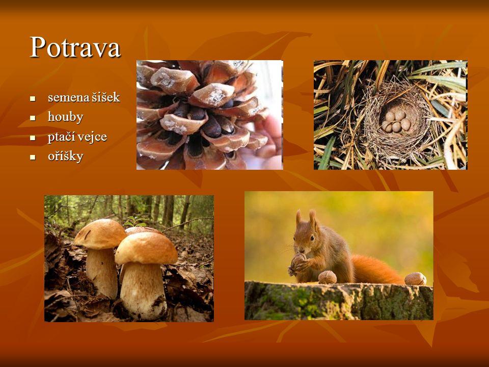 Veverka kapská obývá převážně suché savany a polopouště v jižní Africe.