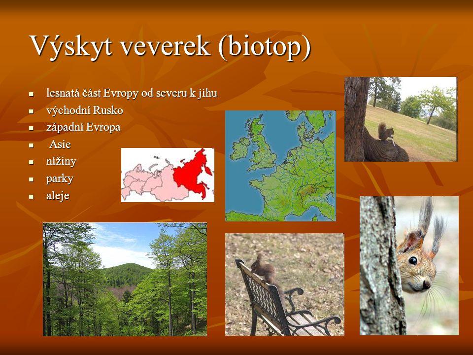 Výskyt veverek (biotop) lesnatá část Evropy od severu k jihu lesnatá část Evropy od severu k jihu východní Rusko východní Rusko západní Evropa západní Evropa Asie Asie nížiny nížiny parky parky aleje aleje