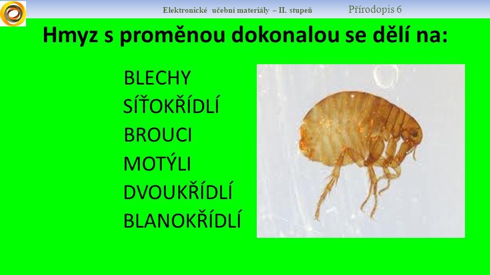 Hmyz s proměnou dokonalou se dělí na: BLECHY SÍŤOKŘÍDLÍ BROUCI MOTÝLI DVOUKŘÍDLÍ BLANOKŘÍDLÍ