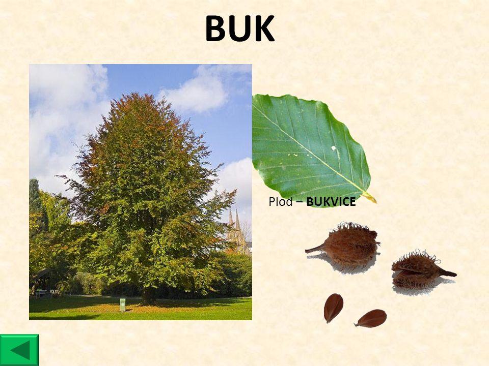 BUK Plod ‒ BUKVICE