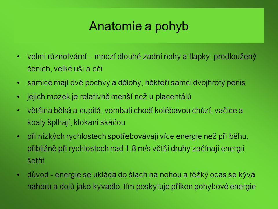 Anatomie a pohyb velmi různotvární – mnozí dlouhé zadní nohy a tlapky, prodloužený čenich, velké uši a oči samice mají dvě pochvy a dělohy, někteří sa
