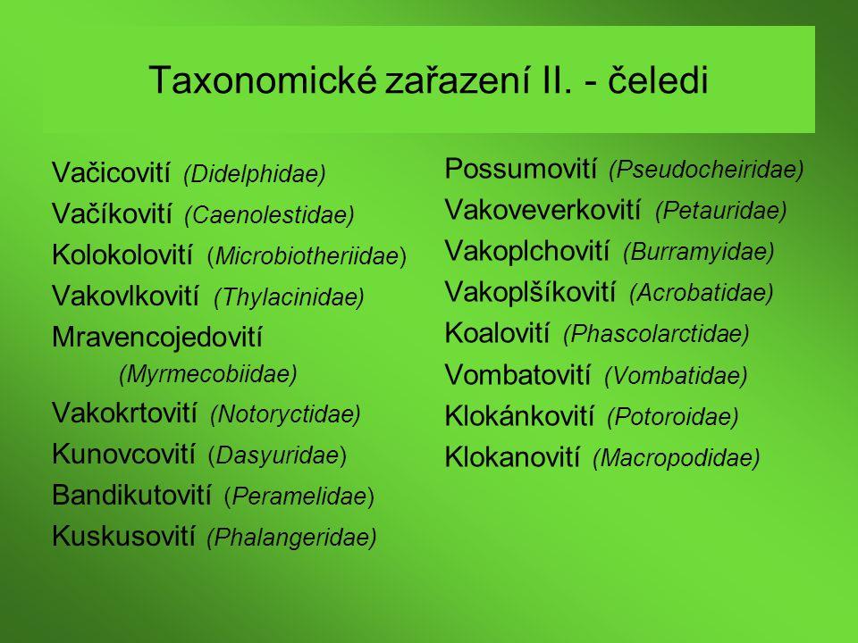 Taxonomické zařazení II. - čeledi Vačicovití (Didelphidae) Vačíkovití (Caenolestidae) Kolokolovití (Microbiotheriidae) Vakovlkovití (Thylacinidae) Mra