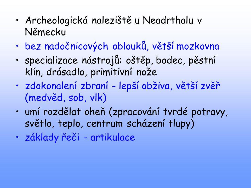 Archeologická naleziště u Neadrthalu v Německu bez nadočnicových oblouků, větší mozkovna specializace nástrojů: oštěp, bodec, pěstní klín, drásadlo, p