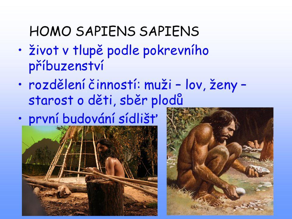 HOMO SAPIENS SAPIENS život v tlupě podle pokrevního příbuzenství rozdělení činností: muži – lov, ženy – starost o děti, sběr plodů první budování sídl