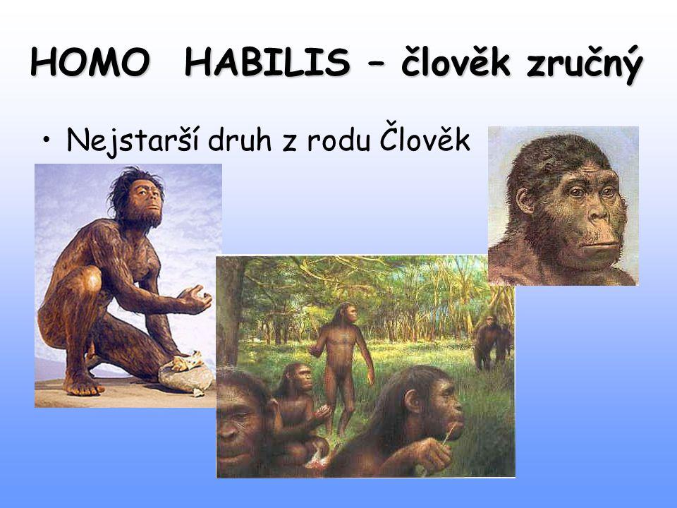 HOMO HABILIS – člověk zručný Nejstarší druh z rodu Člověk