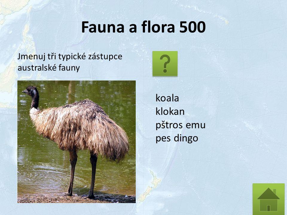 Fauna a flora 500 Jmenuj tři typické zástupce australské fauny koala klokan pštros emu pes dingo