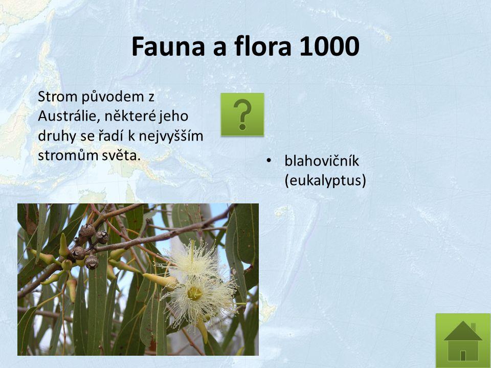 Fauna a flora 1000 Strom původem z Austrálie, některé jeho druhy se řadí k nejvyšším stromům světa.