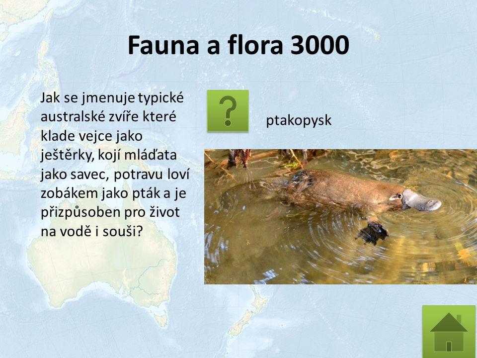 Fauna a flora 3000 Jak se jmenuje typické australské zvíře které klade vejce jako ještěrky, kojí mláďata jako savec, potravu loví zobákem jako pták a je přizpůsoben pro život na vodě i souši.