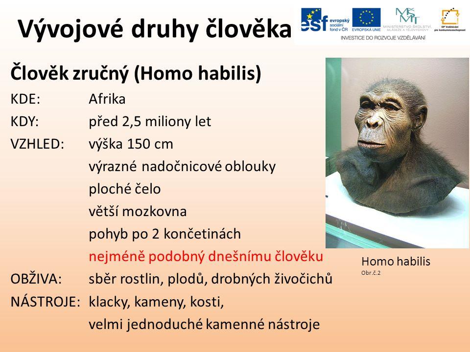 Vývojové druhy člověka Člověk zručný (Homo habilis) KDE:Afrika KDY:před 2,5 miliony let VZHLED:výška 150 cm výrazné nadočnicové oblouky ploché čelo větší mozkovna pohyb po 2 končetinách nejméně podobný dnešnímu člověku OBŽIVA:sběr rostlin, plodů, drobných živočichů NÁSTROJE:klacky, kameny, kosti, velmi jednoduché kamenné nástroje Homo habilis Obr.č.2