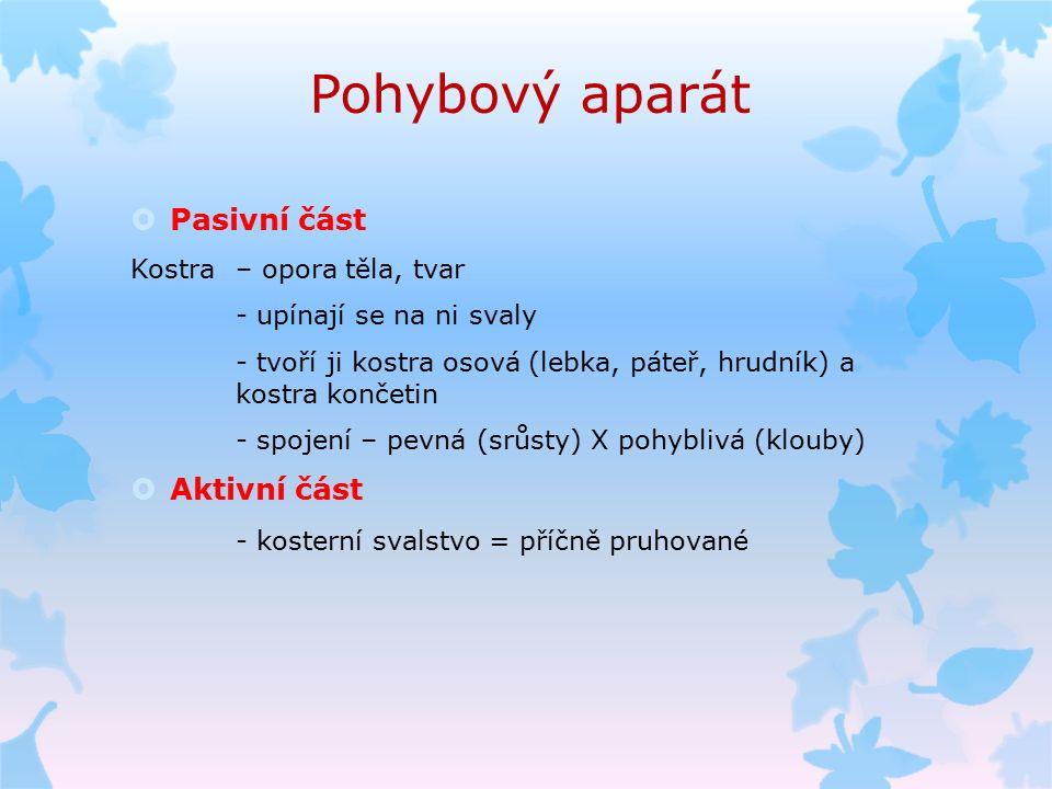 Pohybový aparát  Pasivní část Kostra – opora těla, tvar - upínají se na ni svaly - tvoří ji kostra osová (lebka, páteř, hrudník) a kostra končetin -