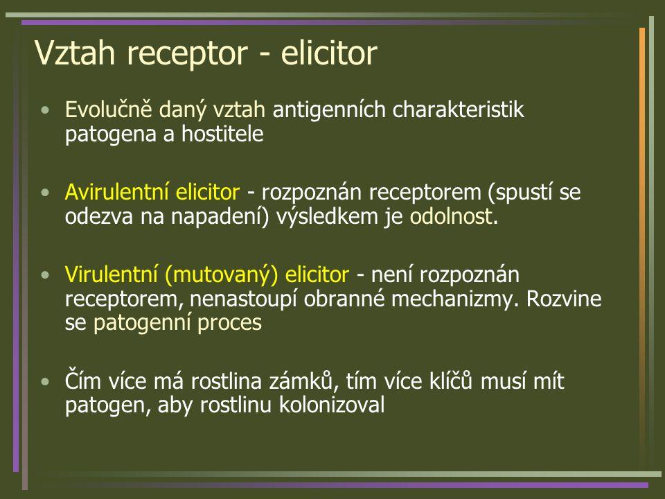 Vztah receptor - elicitor Evolučně daný vztah antigenních charakteristik patogena a hostitele Avirulentní elicitor - rozpoznán receptorem (spustí se odezva na napadení) výsledkem je odolnost.