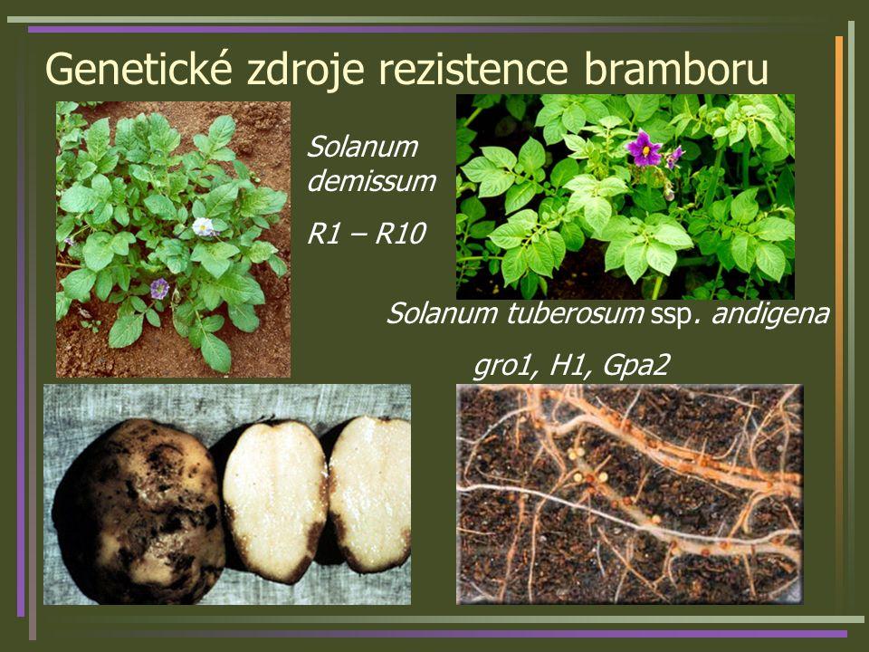Genetické zdroje rezistence bramboru Solanum demissum R1 – R10 Solanum tuberosum ssp. andigena gro1, H1, Gpa2