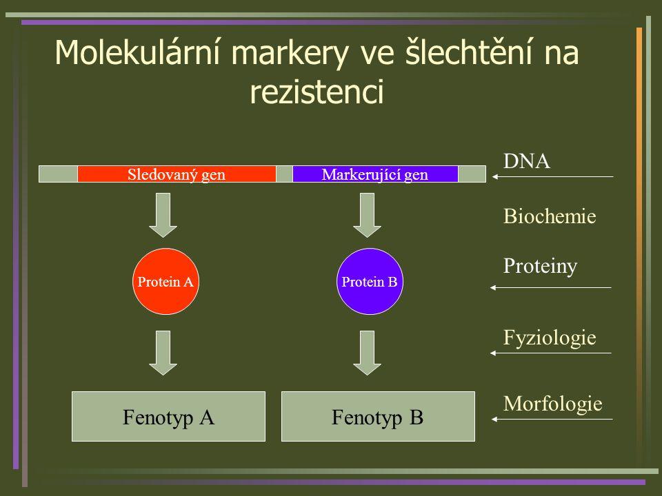 Molekulární markery ve šlechtění na rezistenci Sledovaný genMarkerující gen Protein AProtein B Fenotyp AFenotyp B Morfologie Fyziologie Proteiny DNA B