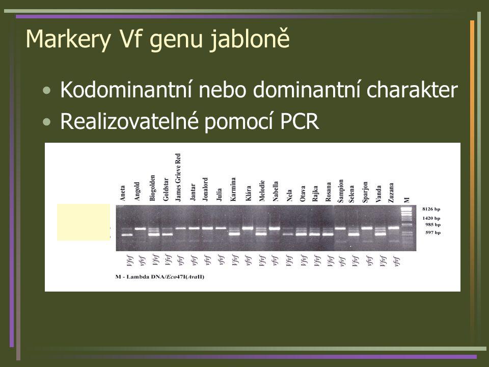 Markery Vf genu jabloně Kodominantní nebo dominantní charakter Realizovatelné pomocí PCR