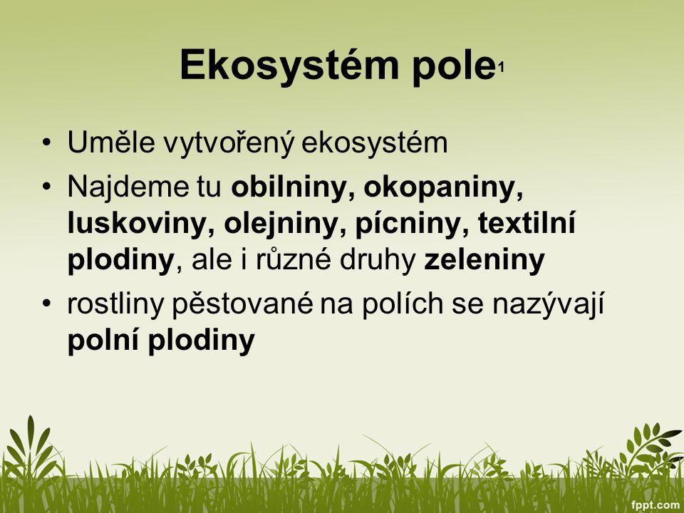 Obilniny 1 Tělo obilnin se skládá z klasu, stébla a kořenů.