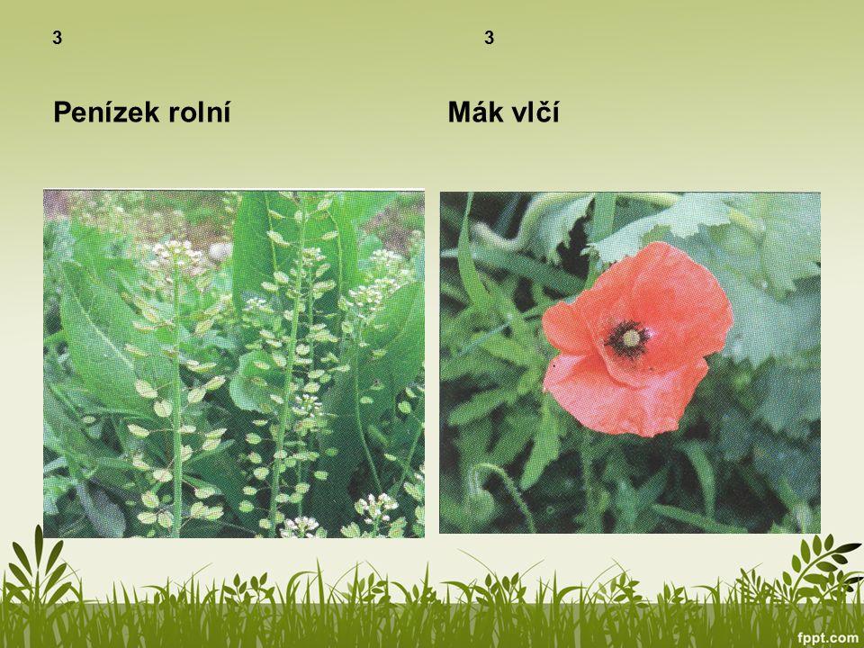 Ekosystém pole Rostliny 3 Polní plodiny jsou rostliny záměrně pěstované pro užitek – jako potrava nebo k průmyslovým účelům.