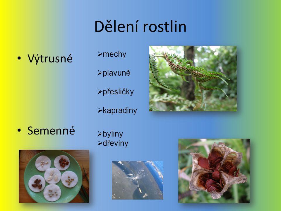 Dělení rostlin Výtrusné Semenné  mechy  plavuně  přesličky  kapradiny  byliny  dřeviny