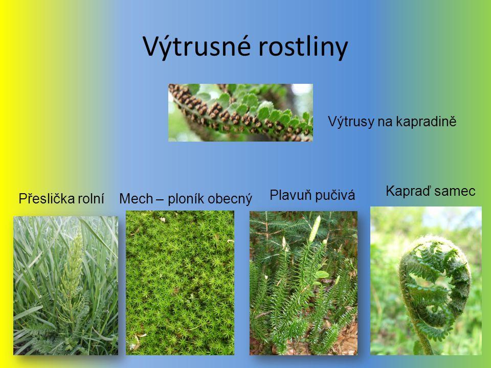 Výtrusné rostliny Přeslička rolní Kapraď samec Mech – ploník obecný Výtrusy na kapradině Plavuň pučivá