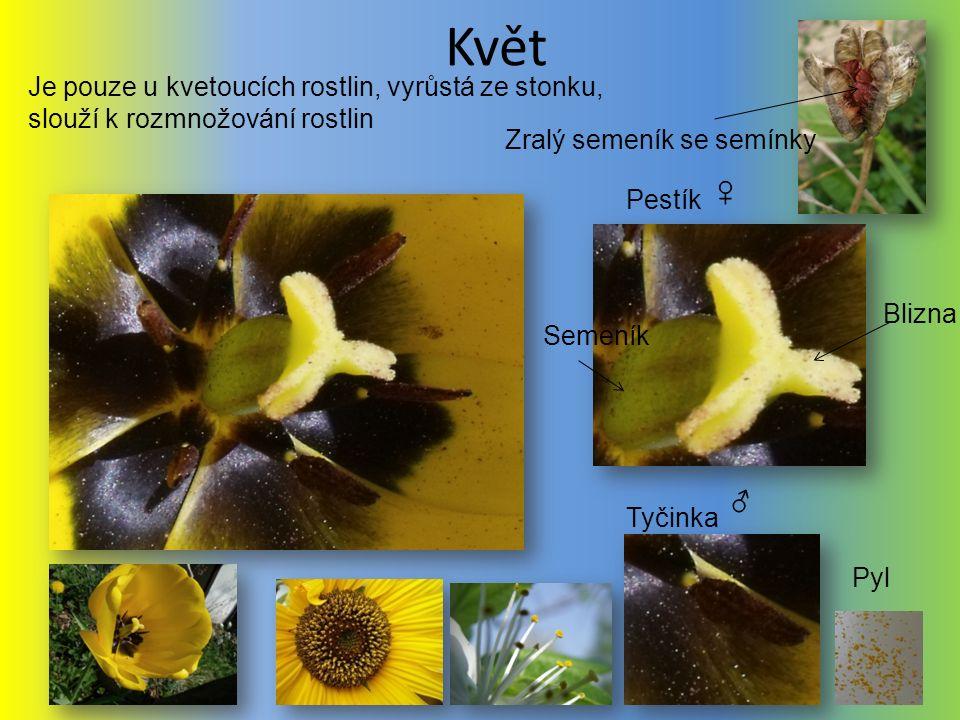 Květ Pestík Tyčinka Je pouze u kvetoucích rostlin, vyrůstá ze stonku, slouží k rozmnožování rostlin Blizna Semeník Pyl Zralý semeník se semínky