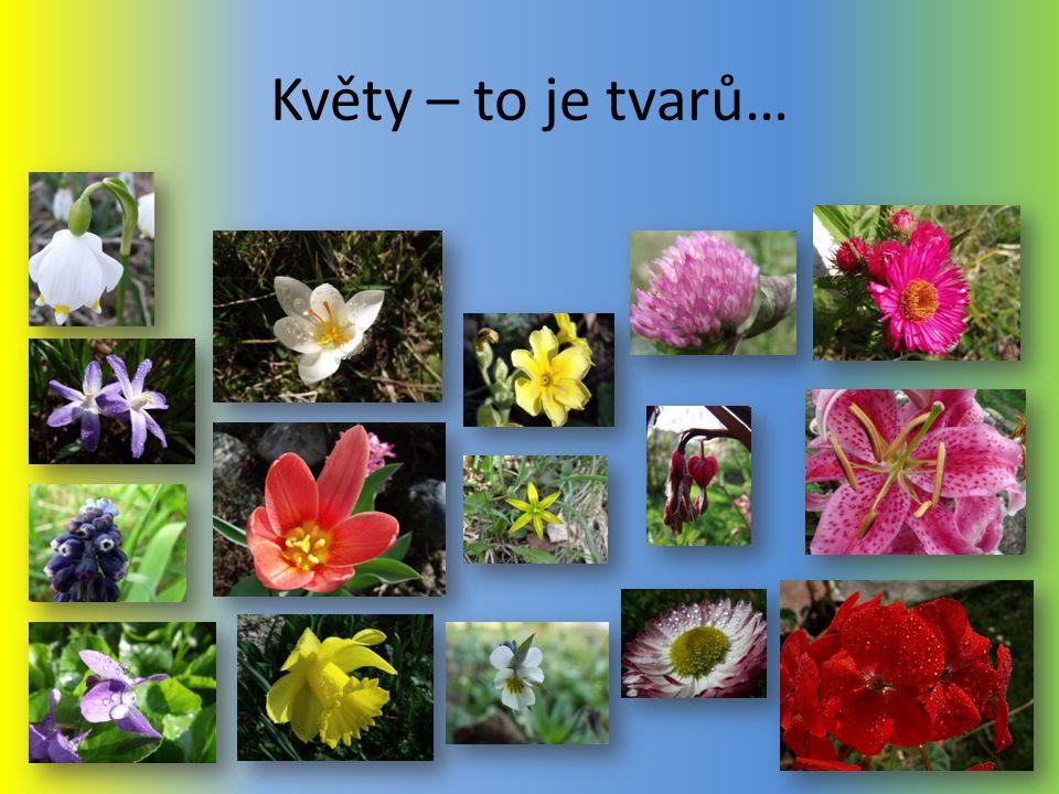 Květy – to je tvarů…