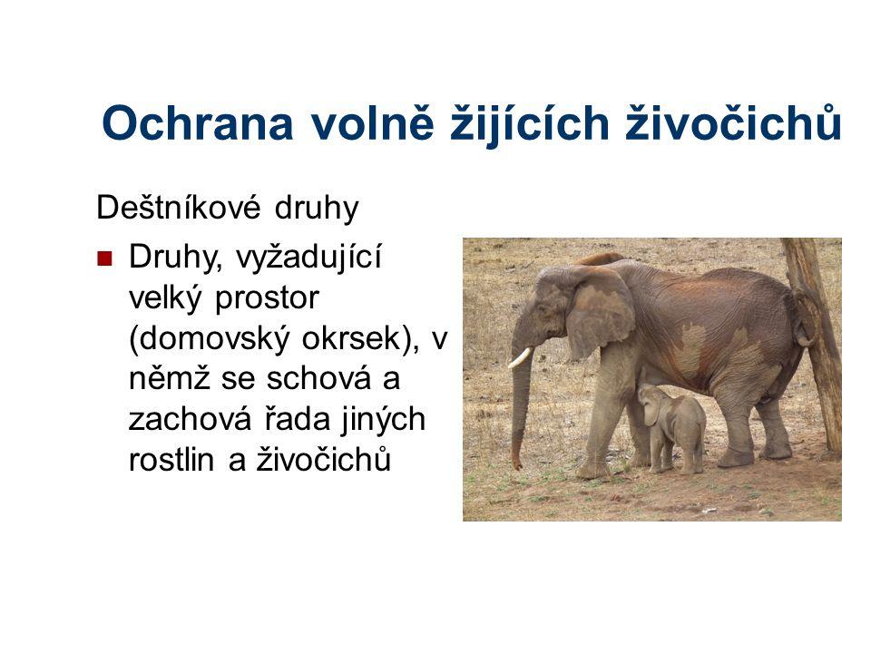Ochrana volně žijících živočichů Deštníkové druhy Druhy, vyžadující velký prostor (domovský okrsek), v němž se schová a zachová řada jiných rostlin a