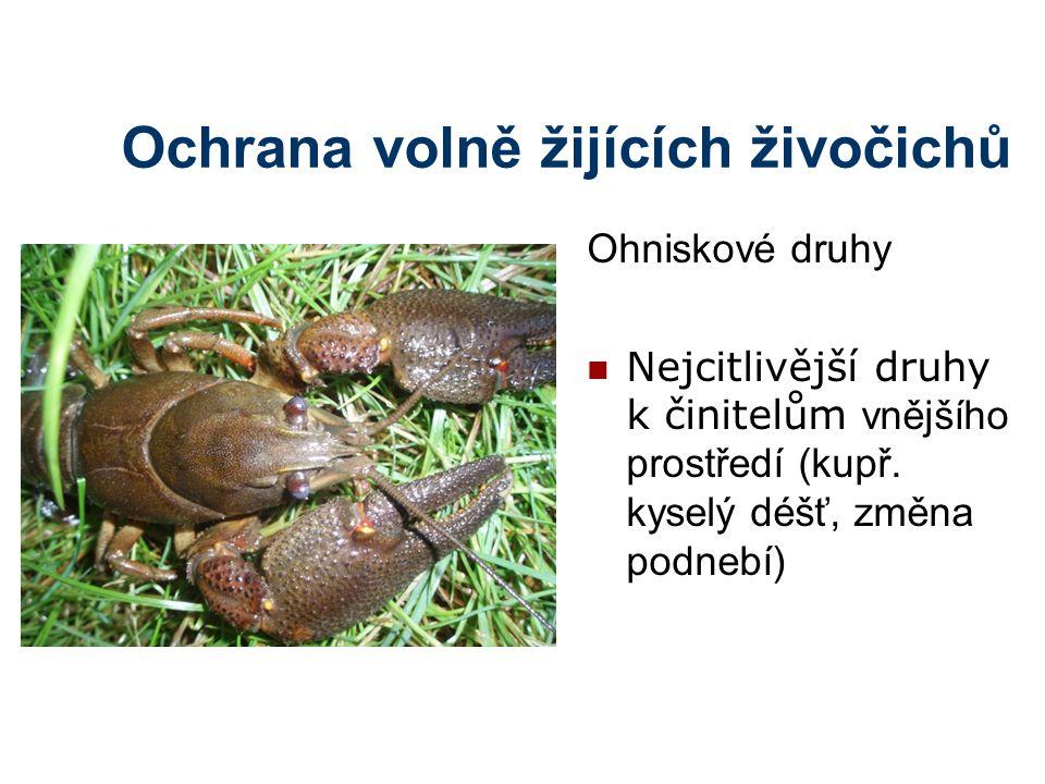 Ochrana volně žijících živočichů Ohniskové druhy Nejcitlivější druhy k činitelům vnějšího prostředí (kupř. kyselý déšť, změna podnebí)