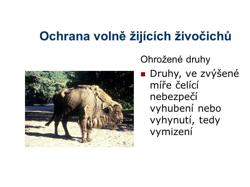 Ochrana volně žijících živočichů Č ervené seznamy – soupisy ohrožených druhů pro určité území (první 1962, Sir Peter Scott) Červené knihy – poskytují další informaci o druzích z červených seznamů (první 1969) Černý seznam – seznam vyhubených nebo vyhynulých druhů Modrý /jantarový seznam – seznam ohrožených druhů, jejichž početnost je stabilní nebo se zvyšuje