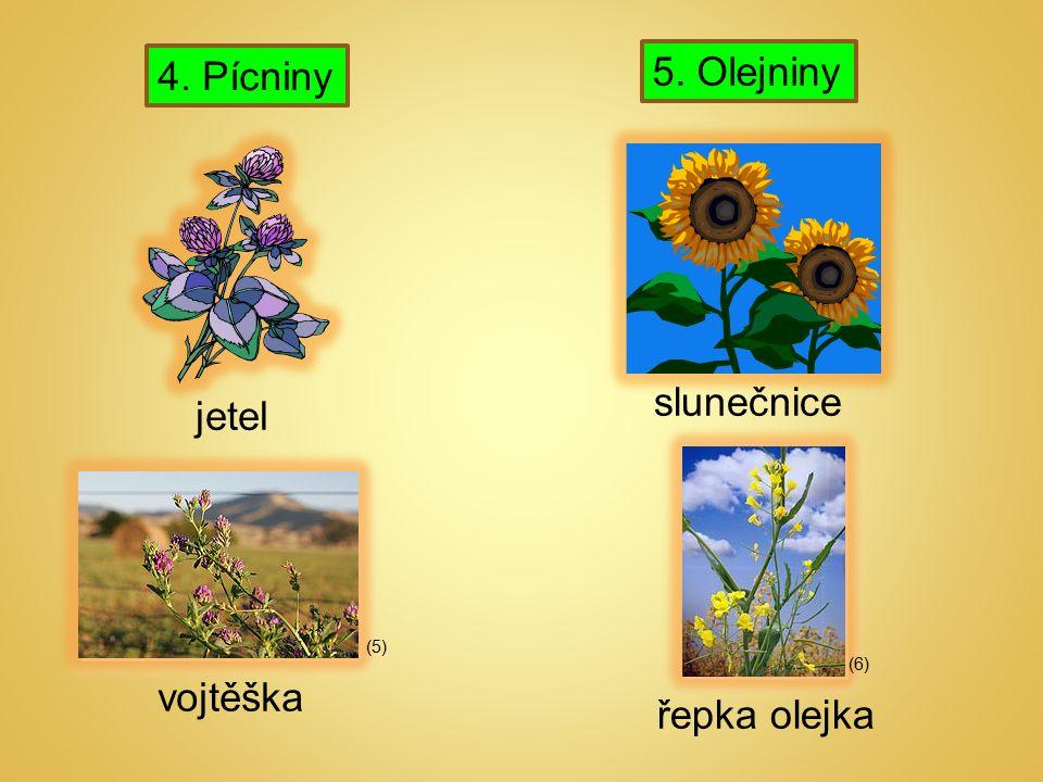 4. Pícniny 5. Olejniny vojtěška (5) (6) jetel slunečnice řepka olejka