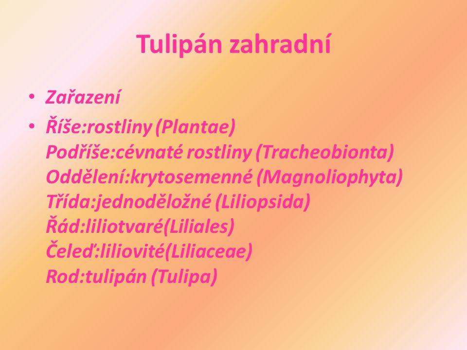Tulipán zahradní Zařazení Říše:rostliny (Plantae) Podříše:cévnaté rostliny (Tracheobionta) Oddělení:krytosemenné (Magnoliophyta) Třída:jednoděložné (Liliopsida) Řád:liliotvaré(Liliales) Čeleď:liliovité(Liliaceae) Rod:tulipán (Tulipa)