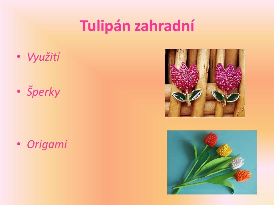 Tulipán zahradní Využití Šperky Origami