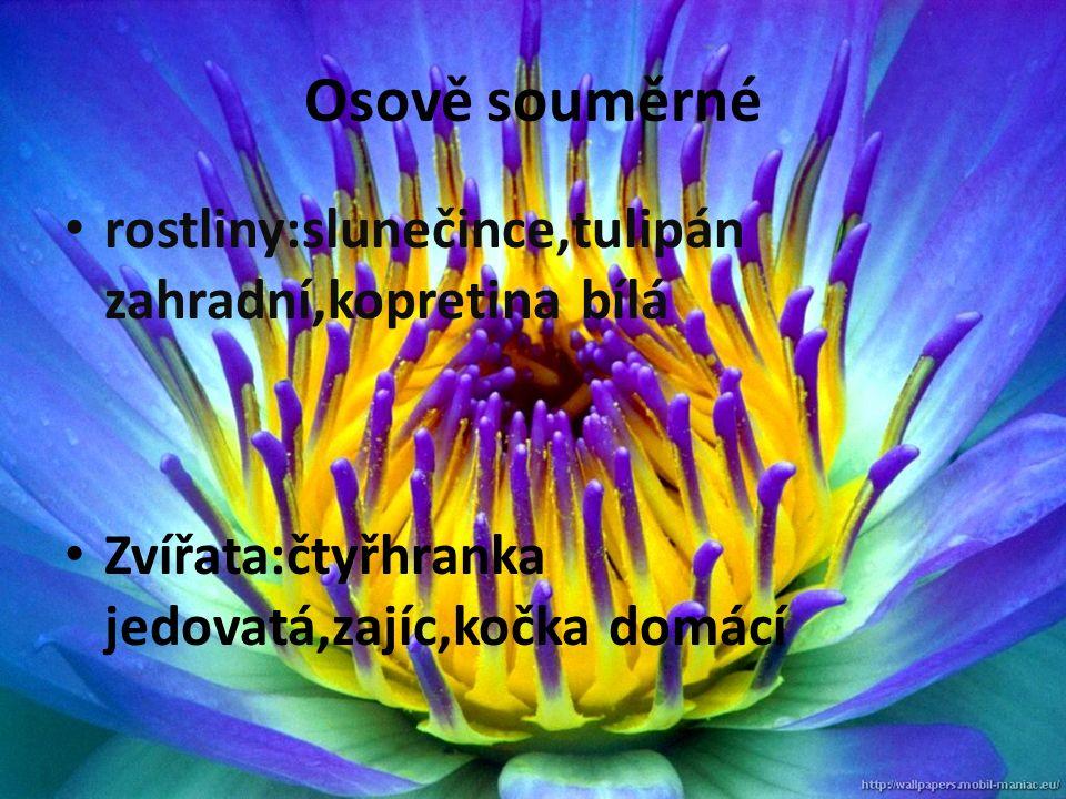 Osově souměrné rostliny:slunečince,tulipán zahradní,kopretina bílá Zvířata:čtyřhranka jedovatá,zajíc,kočka domácí