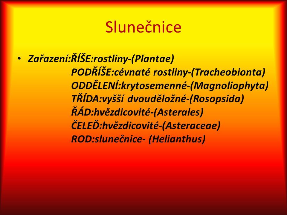 Slunečnice Zařazení:ŘÍŠE:rostliny-(Plantae) PODŘÍŠE:cévnaté rostliny-(Tracheobionta) ODDĚLENÍ:krytosemenné-(Magnoliophyta) TŘÍDA:vyšší dvouděložné-(Rosopsida) ŘÁD:hvězdicovité-(Asterales) ČELEĎ:hvězdicovité-(Asteraceae) ROD:slunečnice- (Helianthus)