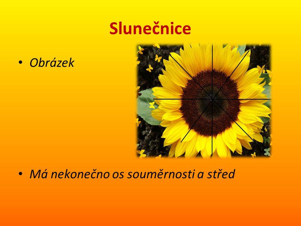 Slunečnice Obrázek Má nekonečno os souměrnosti a střed