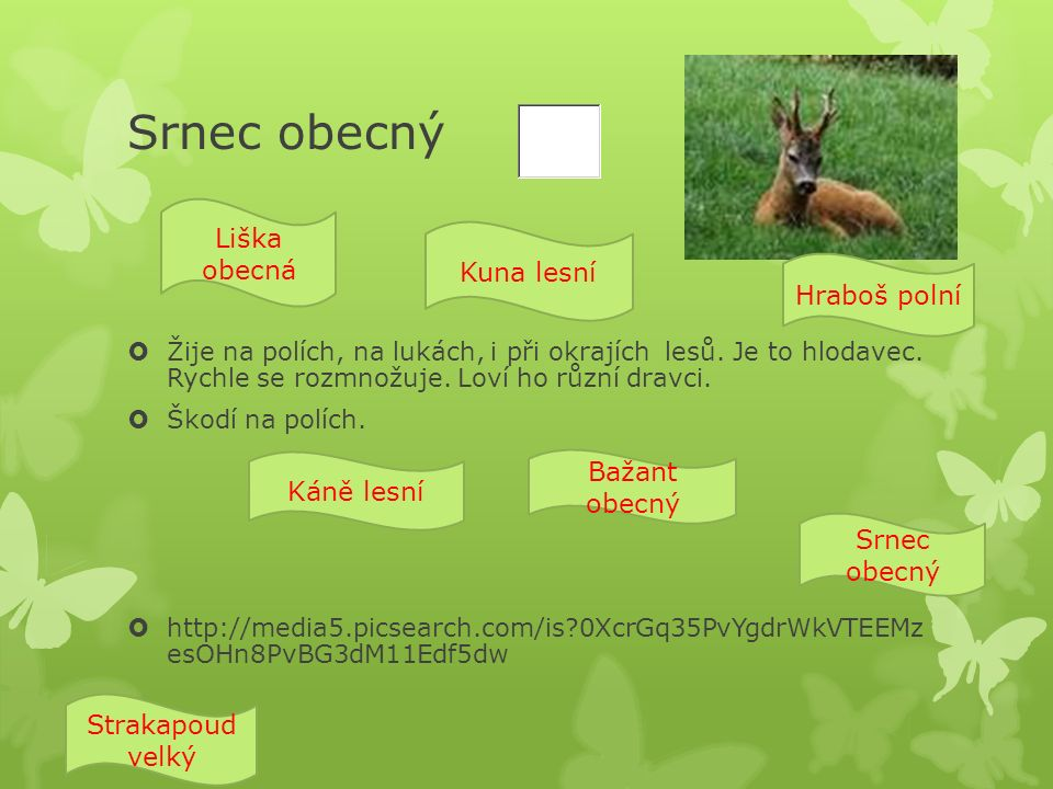 Liška obecná  Je to šelma.Má dlouhý ocas. Dovede rychle šplhat po stromech.