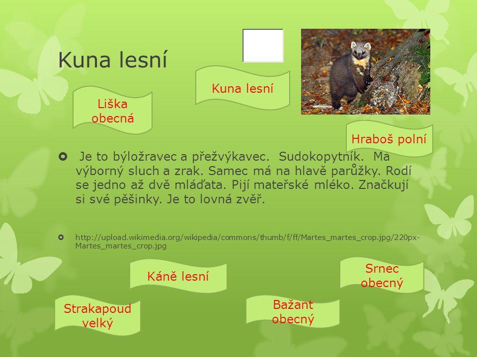 Kuna lesní  Je to býložravec a přežvýkavec. Sudokopytník.