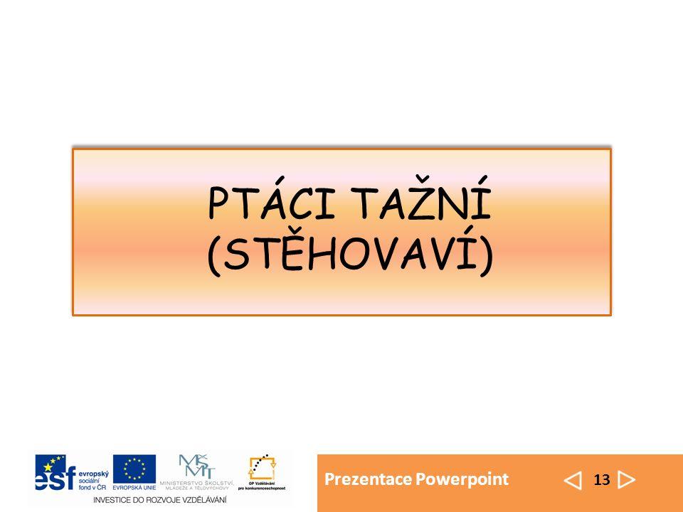 Prezentace Powerpoint 13 PTÁCI TAŽNÍ (STĚHOVAVÍ)